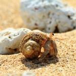 カニの豆知識!タラバ蟹とズワイ蟹の違いって知ってた?